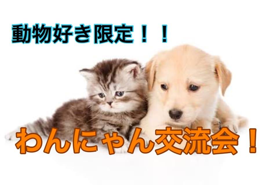 Monday's Cat オフィシャルサイト